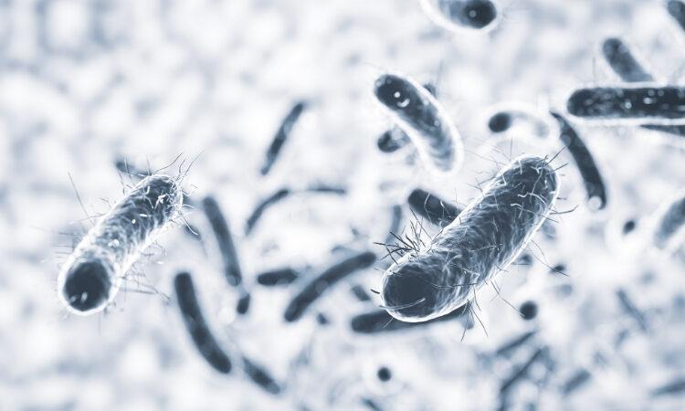 probiotici informazioni