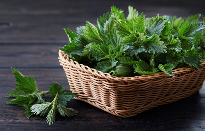 Cucinare con le erbacce l 39 ortica articoli news for Cucinare ortica
