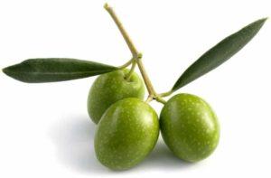 l'idrossitirosolo è un componente naturale delle olive