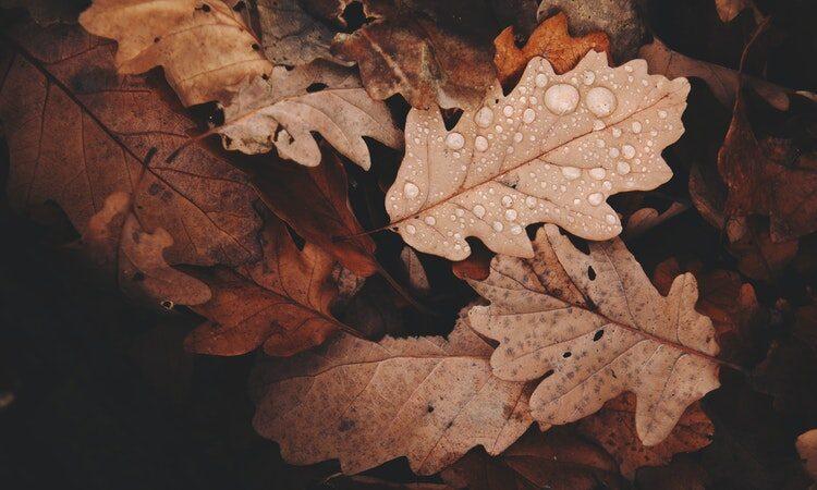 autunno medicina tradizionale cinese